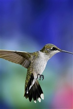 Hummingbird Flug close-up iPhone Hintergrundbilder
